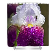 Dewy Iris Shower Curtain