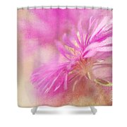 Dewy Pink Asters Shower Curtain by Lois Bryan