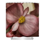 Dewy Pink Painted Begonia Shower Curtain