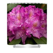 Dewy Rhododendron Shower Curtain