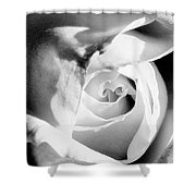 Diamond Rose Bw Palm Springs Shower Curtain