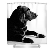 Diamonds Are A Dogs Best Friend Shower Curtain