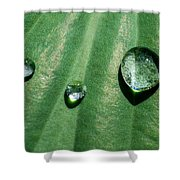 Diamonds Are Forever - Featured 3 Shower Curtain