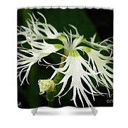 Dianthus Superbus - White Shower Curtain