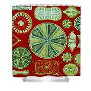 Diatoms-ernst Haeckel Shower Curtain