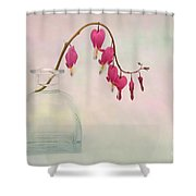 Dicentra In A Glass Vase 2 Shower Curtain