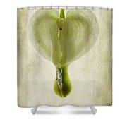 Dicentra Spectabilis Alba Shower Curtain
