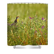 Dickcissel And Flowers Shower Curtain