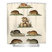 Different Kinds Of Mice Shower Curtain