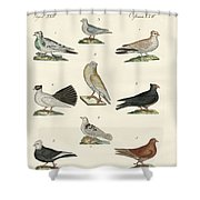 Different Kinds Of Pigeons Shower Curtain