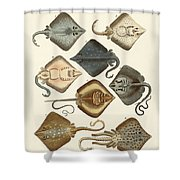 Different Kinds Of Rays Shower Curtain