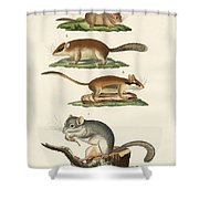 Different Kinds Of Sleepers Shower Curtain