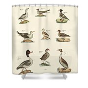 Different Kinds Of Waterbirds Shower Curtain