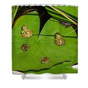 Different Stages Of Frog Growth Shower Curtain