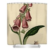 Digitalis  Shower Curtain by Philip Ralley
