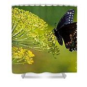 Dill And The Butterfly Shower Curtain