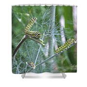 Dillweed And Caterpillars Shower Curtain