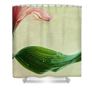 dim colours II Shower Curtain