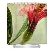 Dim Colours Shower Curtain