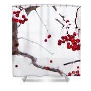 Dingle Berries II Shower Curtain