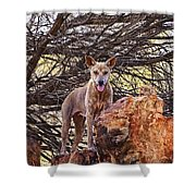 Dingo In The Wild V5 Shower Curtain