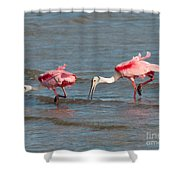 Dining Duo Shower Curtain
