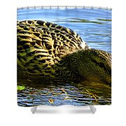 Dining Shower Curtain