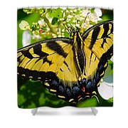 Dinner For The Swallowtail Shower Curtain