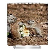 Dinner For Three Shower Curtain