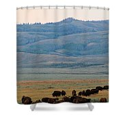 Dinner In The Bushes Shower Curtain