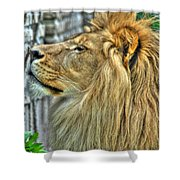Dinner Time...can't You Smell It...lazy Boy At The Buffalo Zoo Shower Curtain
