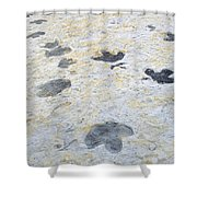 Dinosaur Tracks Shower Curtain