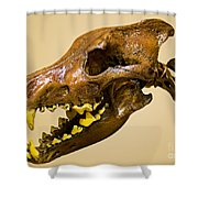Dire Wolf Skull Fossil Shower Curtain