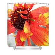 Disheveled 'devil May Care'  Shower Curtain
