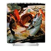 Display Fish Shower Curtain