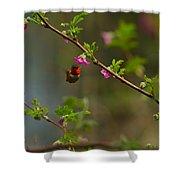 Distant Hummingbird Shower Curtain