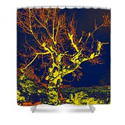 Dried Up Tree Shower Curtain