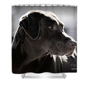 Distracted Dog Shower Curtain