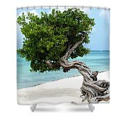 Divi Divi Tree In Aruba Shower Curtain