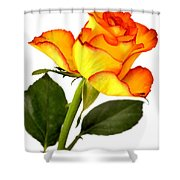 Divine Rose Shower Curtain
