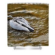 Diving Duck Shower Curtain by Kaye Menner