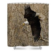 Diving Eagle Shower Curtain