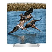 Diving Pelicans Shower Curtain