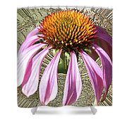 Divinity Gold - Echinacea Shower Curtain