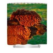 Do You Like My New Haircut Alpaca Shower Curtain
