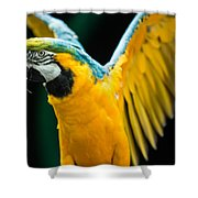Do Your Exercise Daily Blue And Yellow Macaw Shower Curtain
