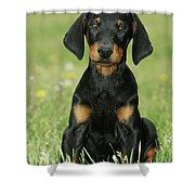 Doberman Pinscher Puppy Shower Curtain