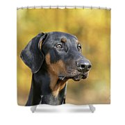 Dobermann Dog, In Autumn Shower Curtain