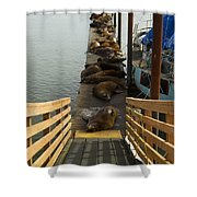 Dock Sea Lions Astoria Or 1 A Shower Curtain