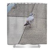 Dockside Stroll Shower Curtain